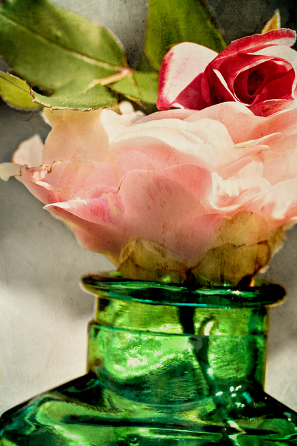camellia, rose, bottle