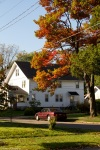 autumn tree in small town