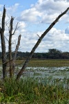 killbuck marsh wayne county ohio