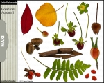 Botanicals Autumn 1 embellishments for digital scrapbooking