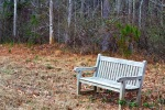 A bench is a nice touch on a nature trail. Especially when it faces a small horse pasture.