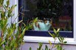 A calico cat keeps watch in a store window.