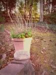 Backyard Fall Mint